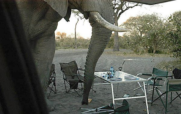 How elephants spoiled a picnic (12 photos)