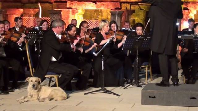 This Vienna Chamber Orchestra Got The Most Unexpected VIP-Guest