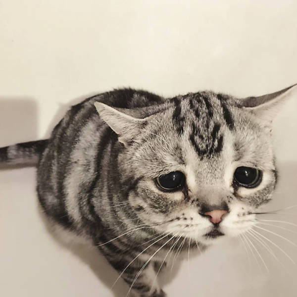 Many People Would Find This World's Saddest Cat Very Relatable