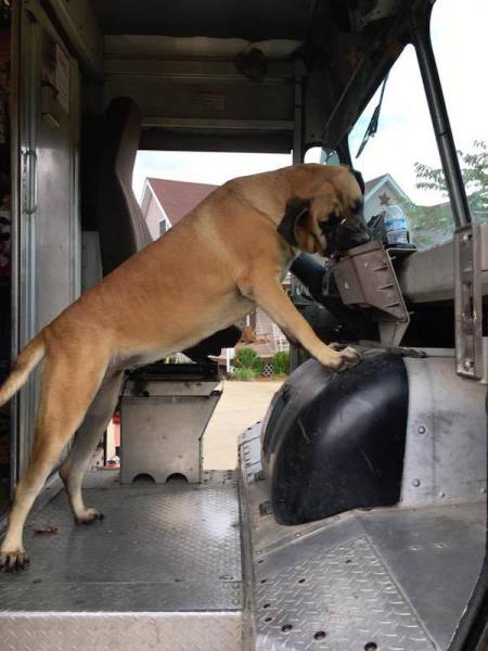 UPS Drivers Meet Lots Of Adorable Dogs And Internet Absolutely Loves The Photos