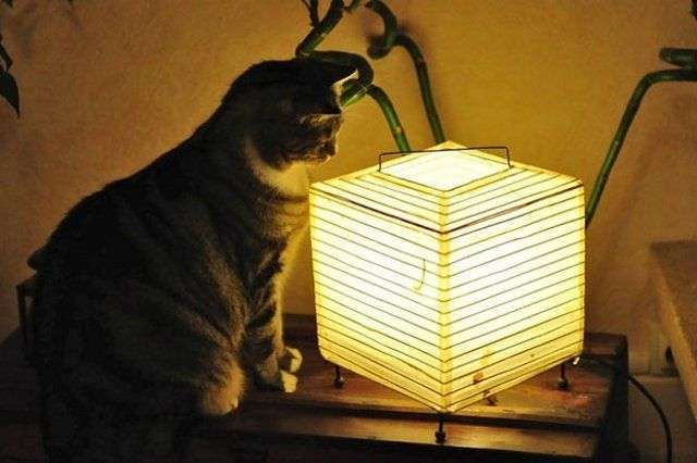 Funny Cats (26 photos)