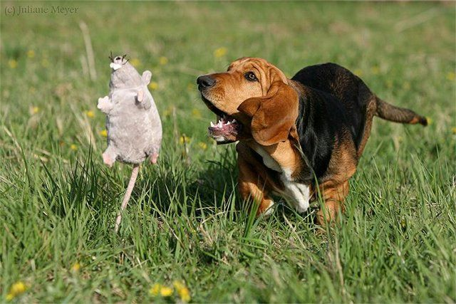 Funny Dogs (29 photos)