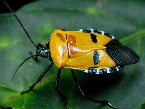 7 Incredible Bugs with Human Faces (7 photos)