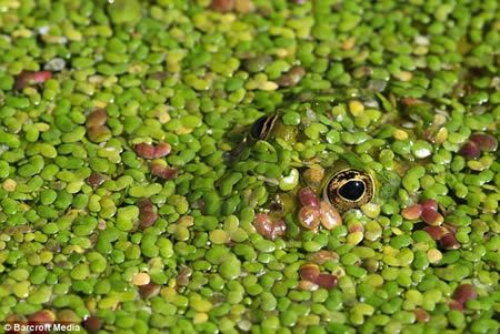 15 Fascinating Animal Camouflage (15 photos)