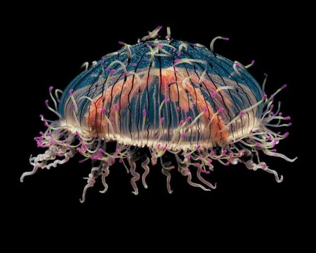 Beautiful pictures with jellyfish (8 photos)