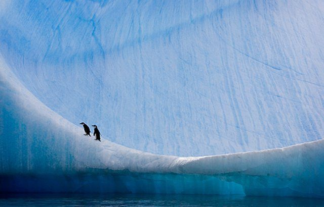 Let's go to the Arctic (22 photos)
