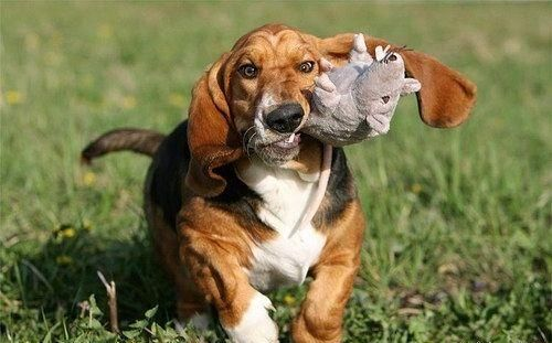 Funny dogs (20 photos)