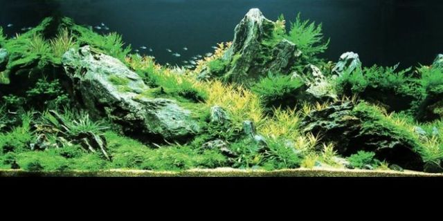 Cool aquariums (23 photos)