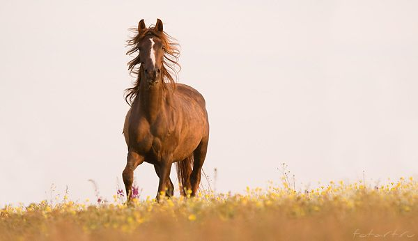 Great pictures of horses! (75 photos)