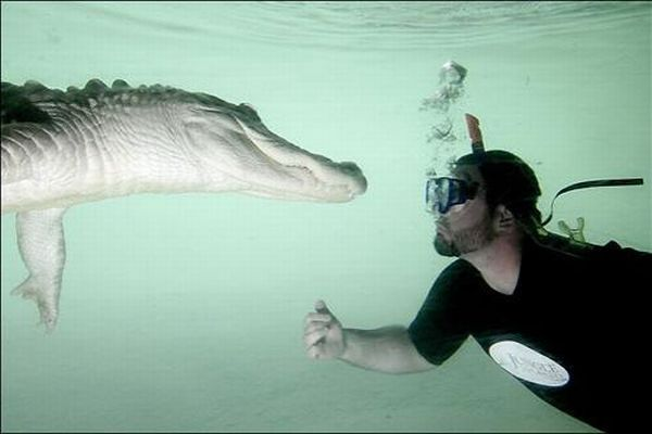 Extreme situations with alligator (7 photos)
