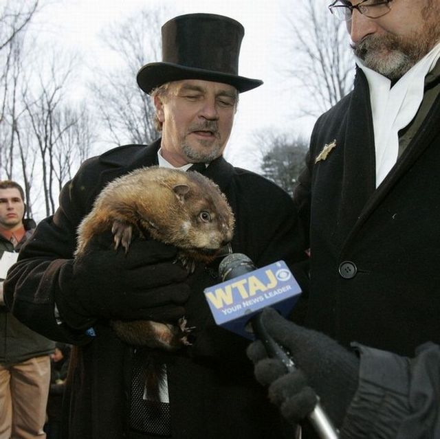 Groundhog day (13 photos)