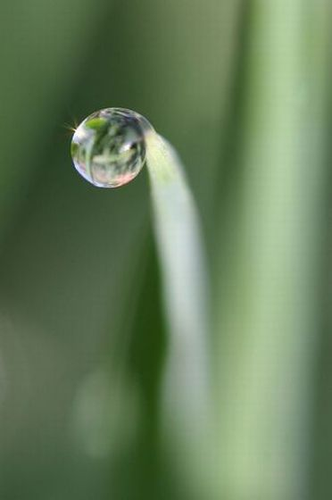 Water drops (15 photos)