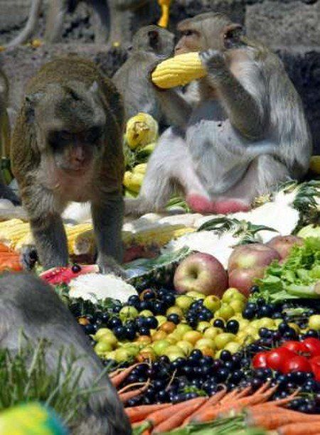 Special party for monkeys in Thailand (13 photos)