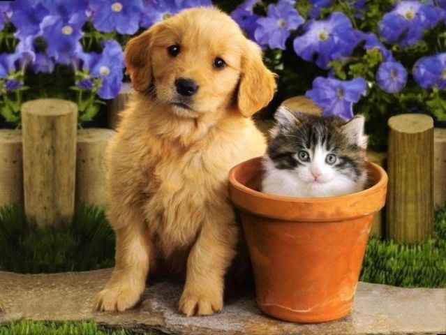 Cats and dogs (7 photos)