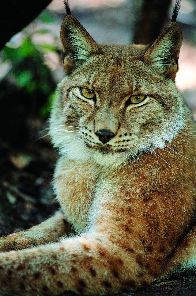 Big And Wild Cats 20 Photos Izismile Com