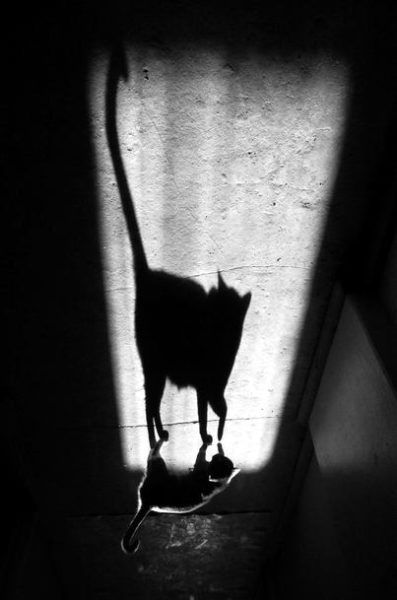 Shadow pictures (21 photos)