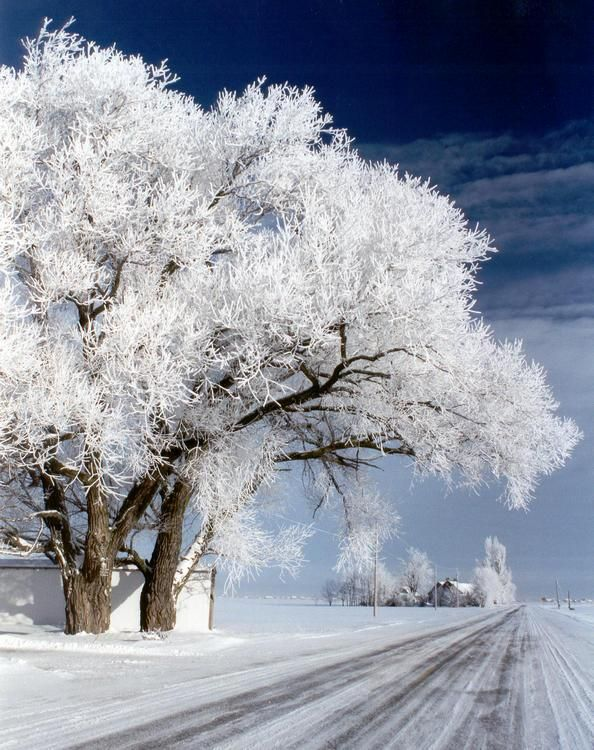 Winter is beautiful (30 photos)