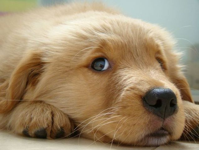Cute puppies (18 photos)