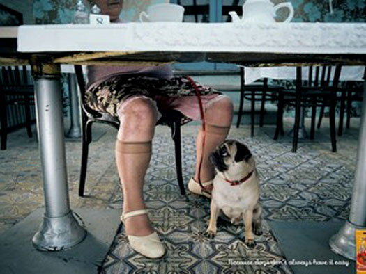 Hilarious pet ads (10 photos)