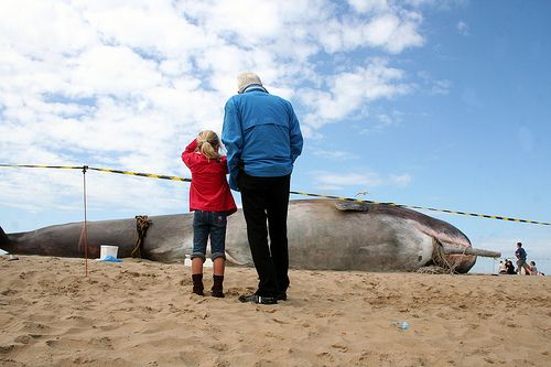 Fabulous beach sculpture of a sperm whale (5 photos)