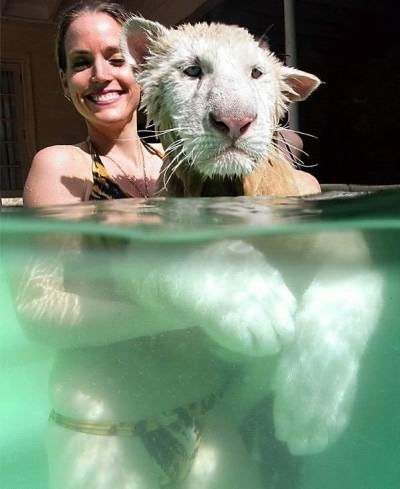 Who said that cats didn't like water? (16 photos)
