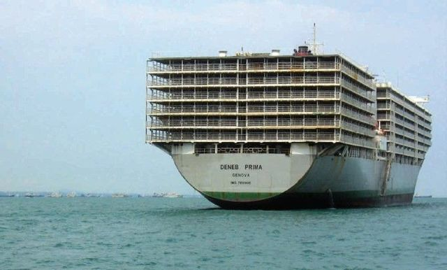 Stella Deneb – the world's largest livestock carrier (3 photos)