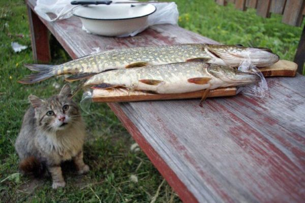 Animals are hungry )) (17 photos)
