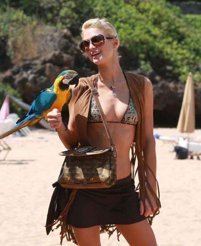 Paris Hilton in bikini (8 photos)