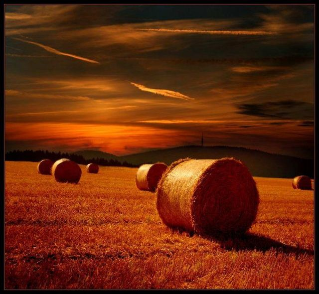 Beautiful pictures from Veronika Pinke (19 photos)