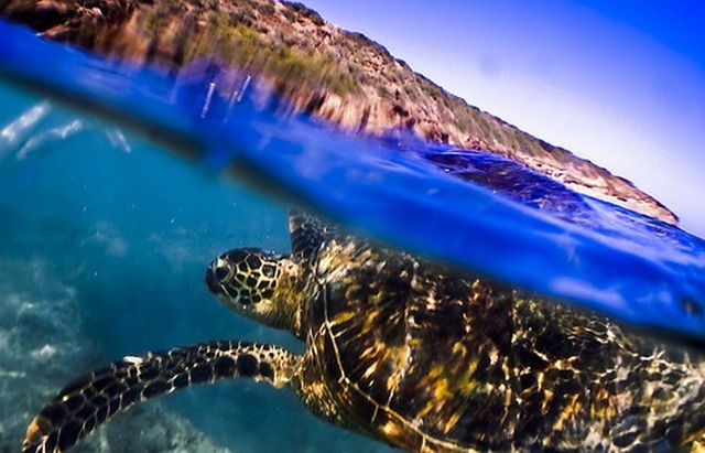 Half-underwater photos. Very beautiful (13 photos)