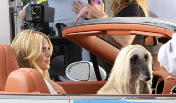 Celebrities and their dogs (9 photos)