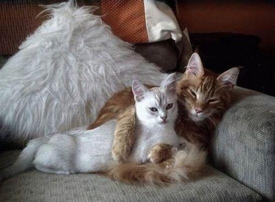 buona notte dans immagini buon...notte, giorno cats_love_15