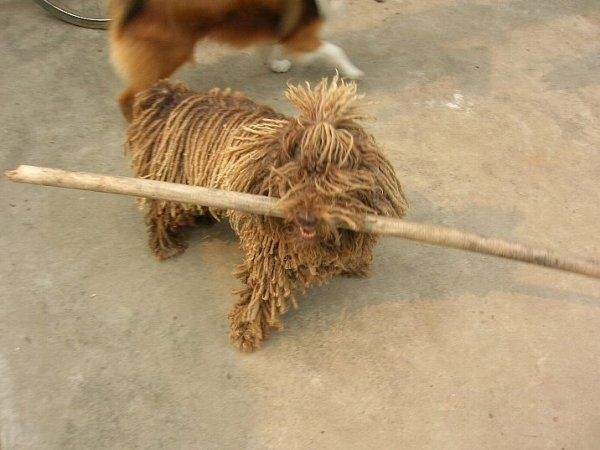 A live mop (8 photos)