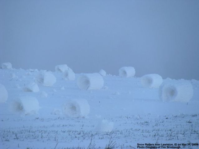 Snow Rollers on the Camas Prairie (6 photos)