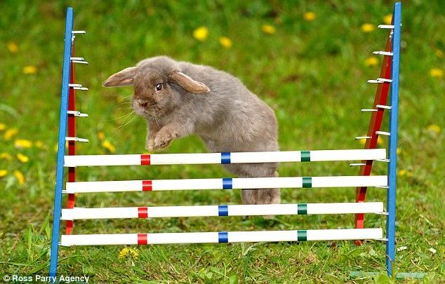 Competition of rabbits (5 pics)