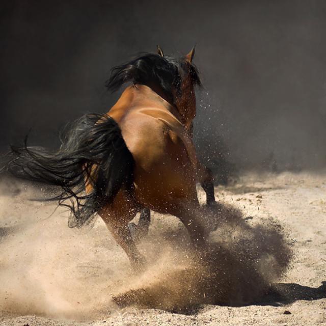 Horses In All Their Splendor 33 Pics Izismilecom