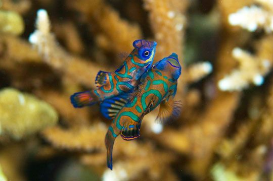 Inhabitants of the underwater world (13 pics)