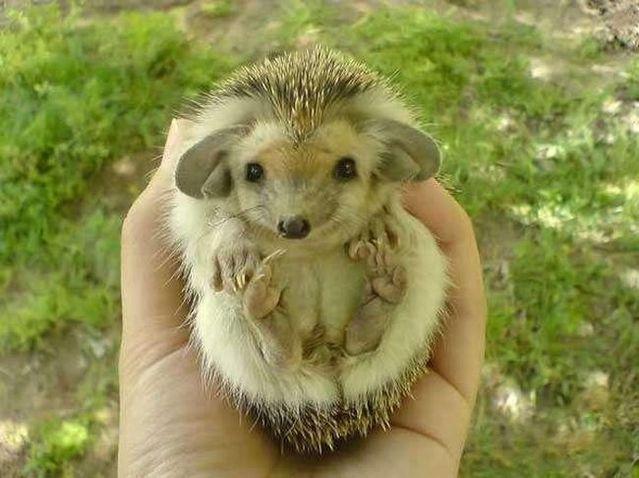 http://izismile.com/img/img2/20090518/hedgehog_03.jpg