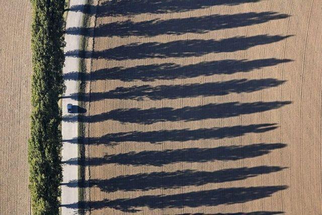 Living shadows (31 pics)