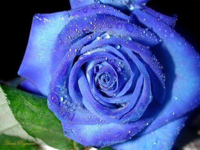 Красивые синие картинки - f4c