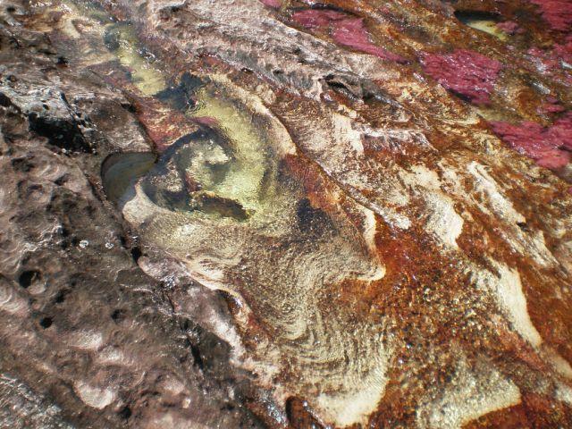 نهر Cano Cristales وهو يعتبر أجمل و أروع نهر في العالم Rainbow_river_05