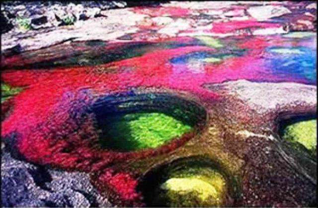 نهر Cano Cristales وهو يعتبر أجمل و أروع نهر في العالم Rainbow_river_10
