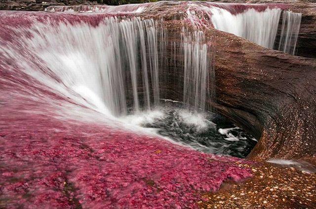 نهر Cano Cristales وهو يعتبر أجمل و أروع نهر في العالم Rainbow_river_13
