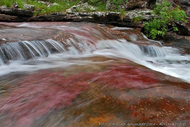 نهر Cano Cristales وهو يعتبر أجمل و أروع نهر في العالم Rainbow_river_15