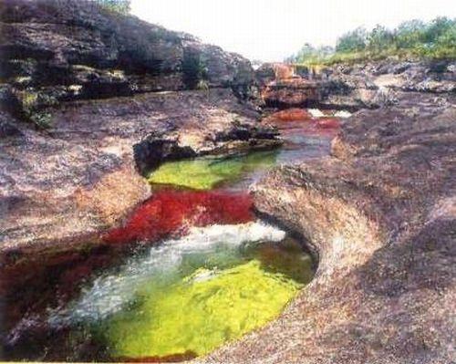 نهر Cano Cristales وهو يعتبر أجمل و أروع نهر في العالم Rainbow_river_19