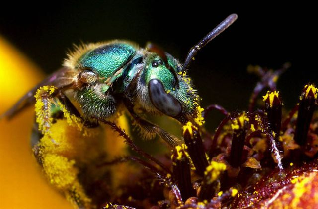 Extreme Close-Ups of Insects' Eyes (18 pics)