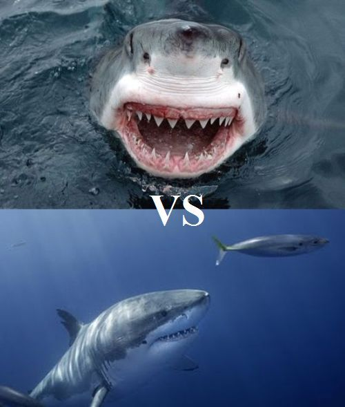 What would happen if two sharks got fighting? (3 pics + 1 video)
