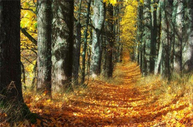 autumn latvia 12 - Autumn in Latvia