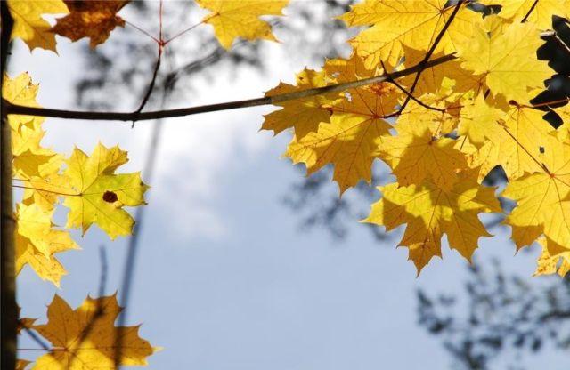 autumn latvia 25 - Autumn in Latvia