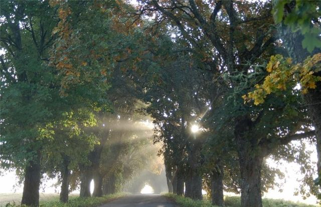 autumn latvia 27 - Autumn in Latvia